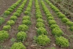 2021-06-12-salatsalatsalat