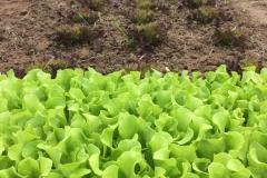 Salat Salat Salat