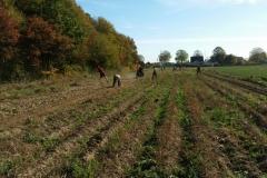 Kartoffelernte-2018-10-13_5