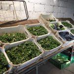 Foto der letzten Ernte in 2020, zu sehen sind Rosenkohl, Weiß- und Rotkohl, einige Zucchini